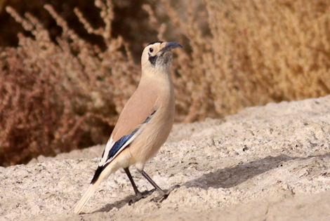 3 Days Xinjiang Ground Jay Extension